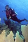 Cape Town Diving - AAA Travel